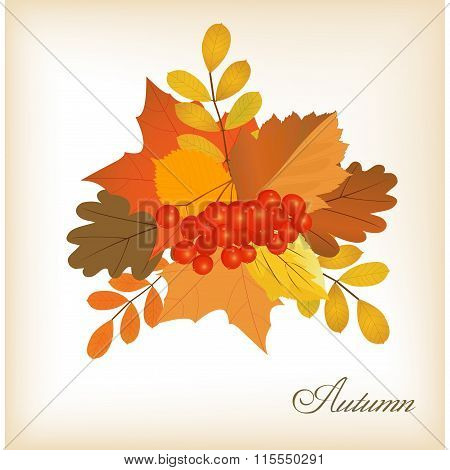 Autumn Leaves Bunch