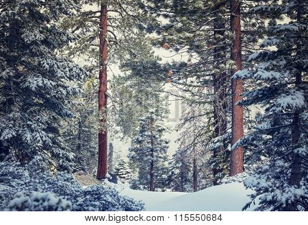 Scenic snow-covered forest in winter