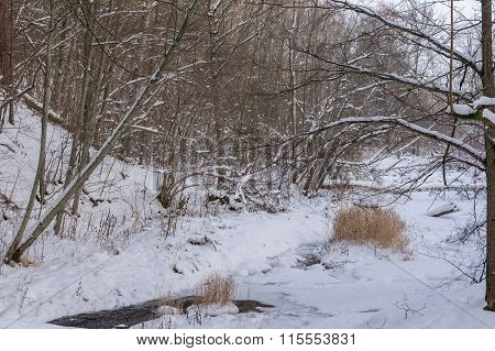 Forest River In Winter
