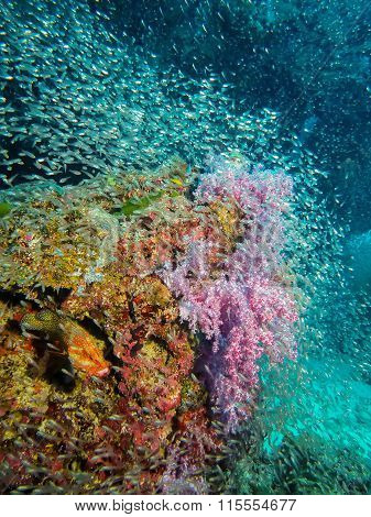 Blue-spotted Sea Bass And Coral Reef