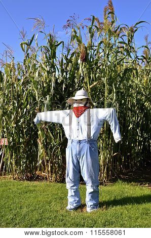 Man shaped scarecrow by corn field
