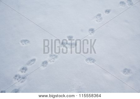 Animal Tracks In The White Snow. Wildlife