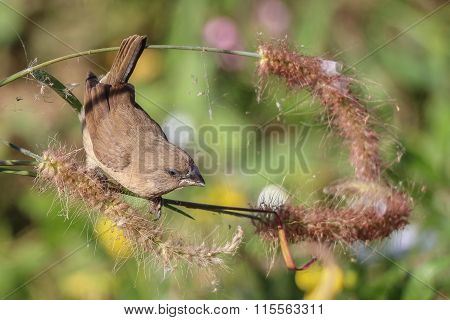 Sparrow Bird In Tree (soft Focus)