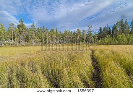 The Path Through The Swampy Meadow On The Edge Of The Forest.