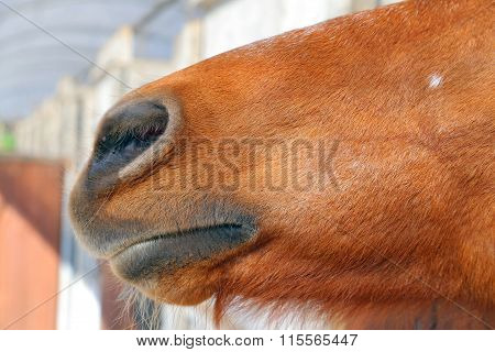 An Abstract Shot Of The Muzzle Of A Horse With Blur Backgruound