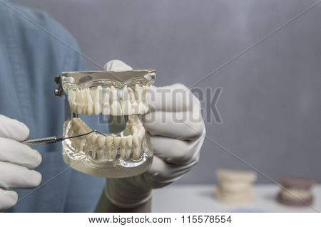 Dental cleaning demonstration with model