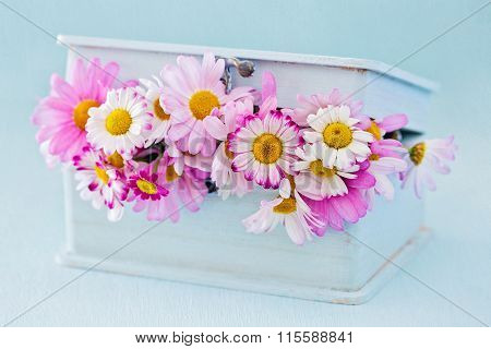 ?hamomile flowers in a box