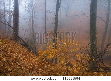 Leaf Fall In A Misty Forest