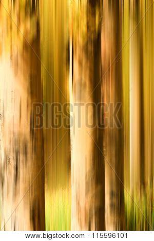 Abstract Blur of Aspen Trunks