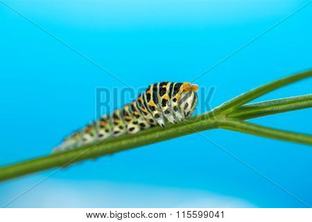 Green Caterpillar Creeps On A Green Leaf Isolated
