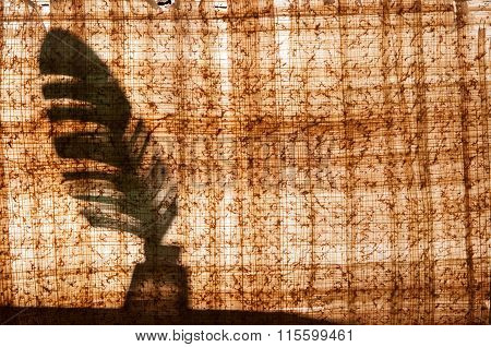 Backlit Papyrus Sheet