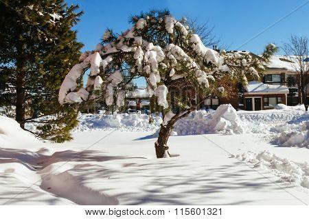snow tree nature winter