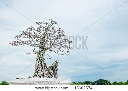 Dried Bonsai In Park With Blue Sky