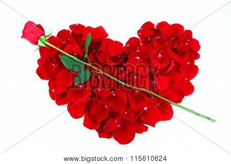 rose petals red heart with single rose