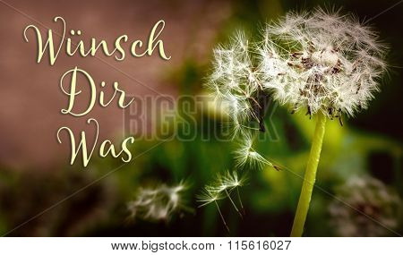 Closeup From A Dandelion With German Text, Concept Wishes And Presents