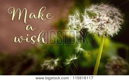 Closeup From A Dandelion With Text Make A Wish