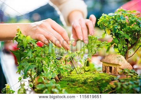 Closeup of mini garden with small trees and house taken care by woman hands