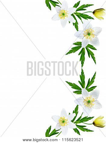 Spring Flowers Snowdrops Isolated On White Background