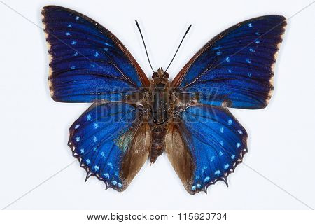 Common Blue Charaxes Butterfly, Isolated On White