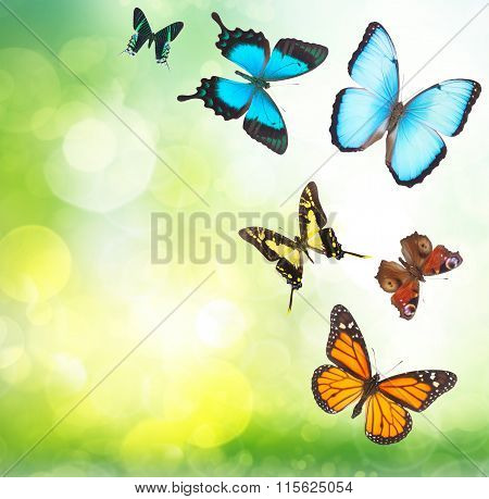 Tropical butterflies in garden