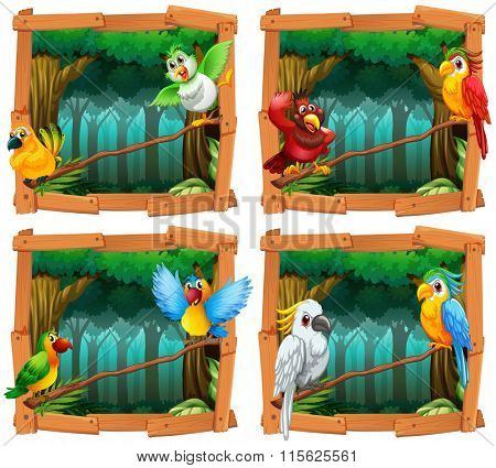 Wild birds in the forest illustration