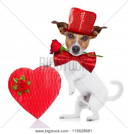 Valentines Dog In Love