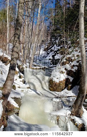 Frozen Creek In The Forest