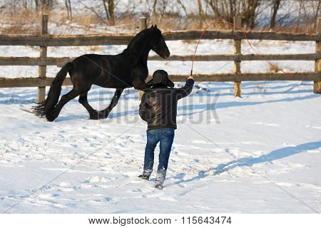 Man Dressage Black Frisian Horse