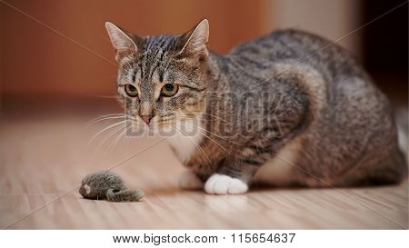 Striped Cat With White Paws Plays With A Toy Mouse.