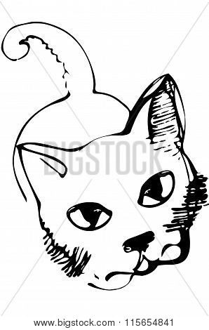 Vector Sketch Of A Cat Looking Into The Eyes