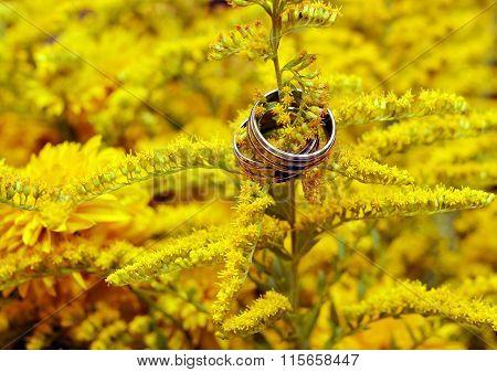 Two Wedding Rings Among Yellow Flowers