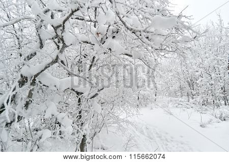 Winter forest in snow during the day