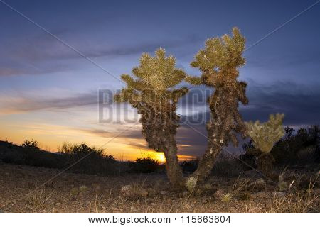 An image of a cholla cactus during sunset at Superstition desert in Arizona shows the rugged detail of a dry, parched wilderness
