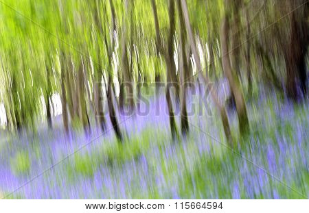 Abstract Bluebells In A Forest