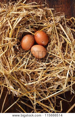 chicken eggs on hay, top view