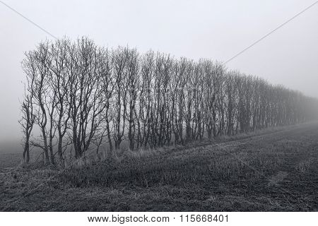 Trees In The Fog