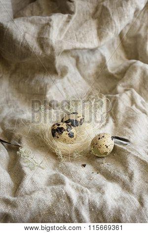 Farm quail eggs in a birds nest on rustic burlap.