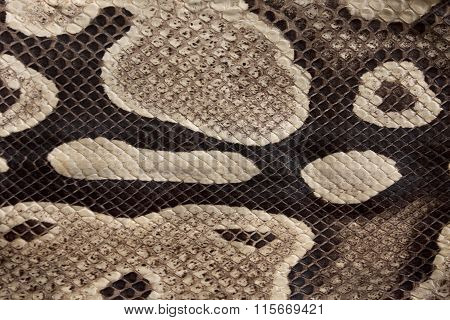 Real Boa Snake Skin Texture Close Up