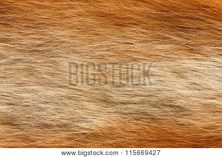 Real Fox Fur Texture Close Up For Background