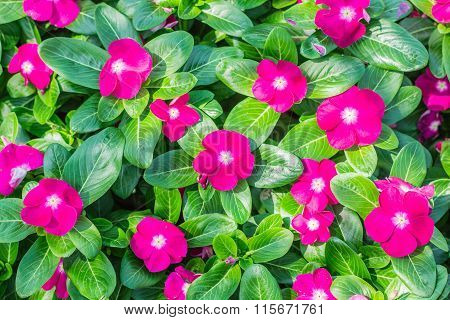 Flowers On A Garden