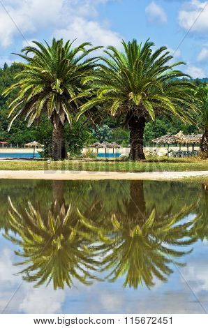 Palm tree reflection in a puddle after summer storm