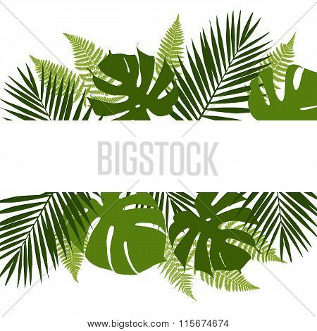 Tropical leaves background with white banner. Palmfernsmonsteras. Vector illustration