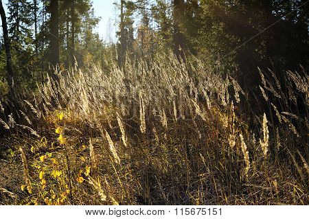 Colors Of Autumn Grass