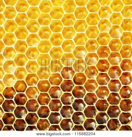 Vector illustration - unfinished honey in honeycombs. Eps 8 using mesh.