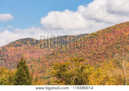 Autumn Foliage In White Mountain National Forest, New  Hampshire