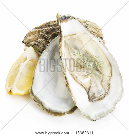 Oysters With Lemon And Dill Close-up Isolated On A White Background. Seafood.