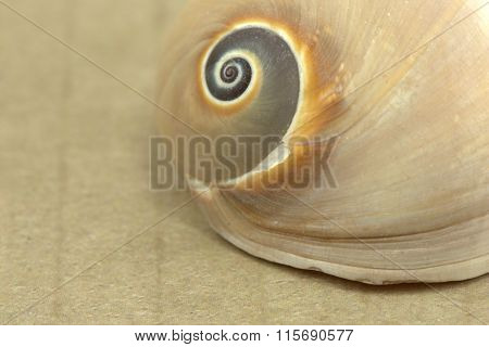 Seashell with room for text