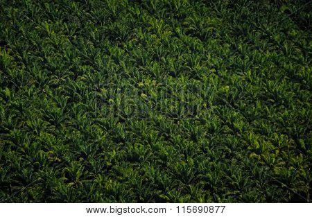 Never Ending Tropical Plantations
