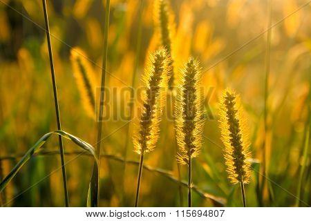 Beautiful Nature Landscape, Plants At Golden Sunset