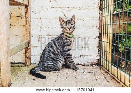 Alert Striped Grey Tabby Cat Sitting Watching